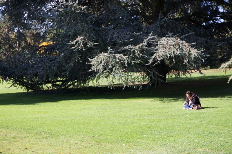 18 under the tree