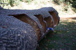 21 log hiding
