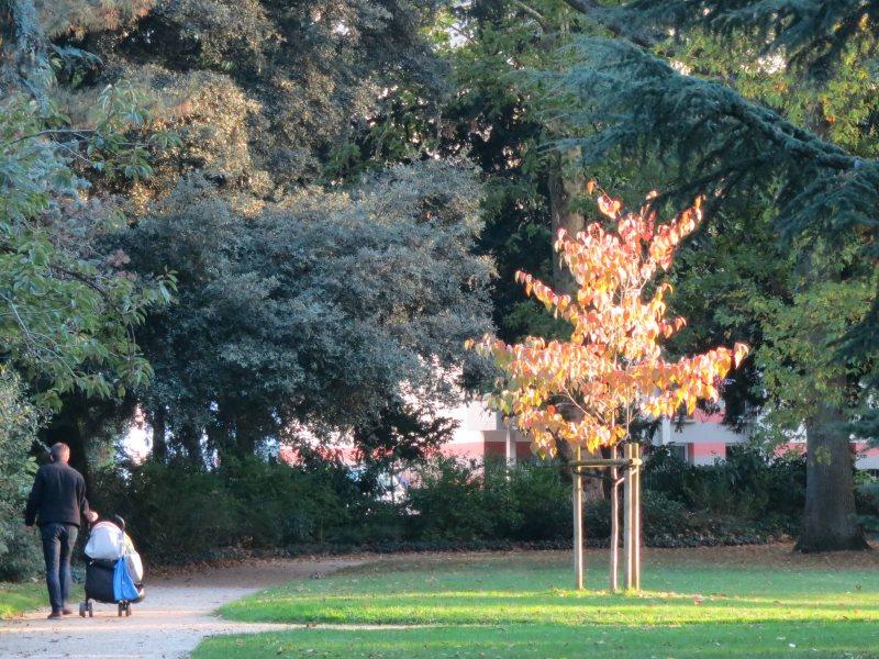 small tree - small person
