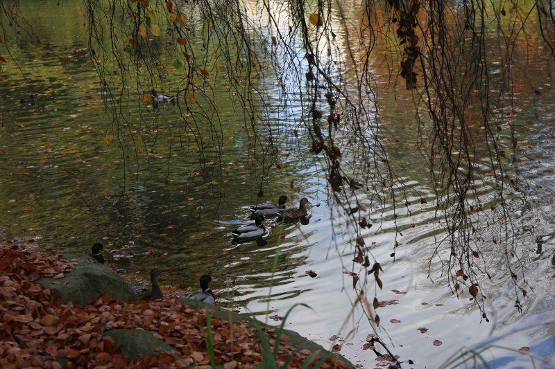 07 ducks