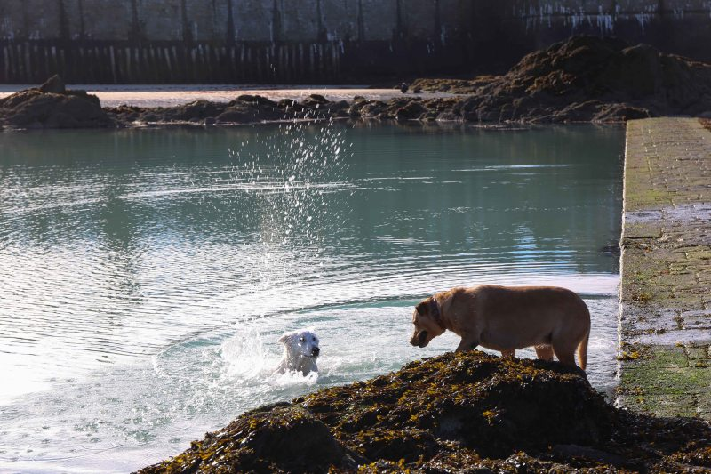 dog 1 swimming