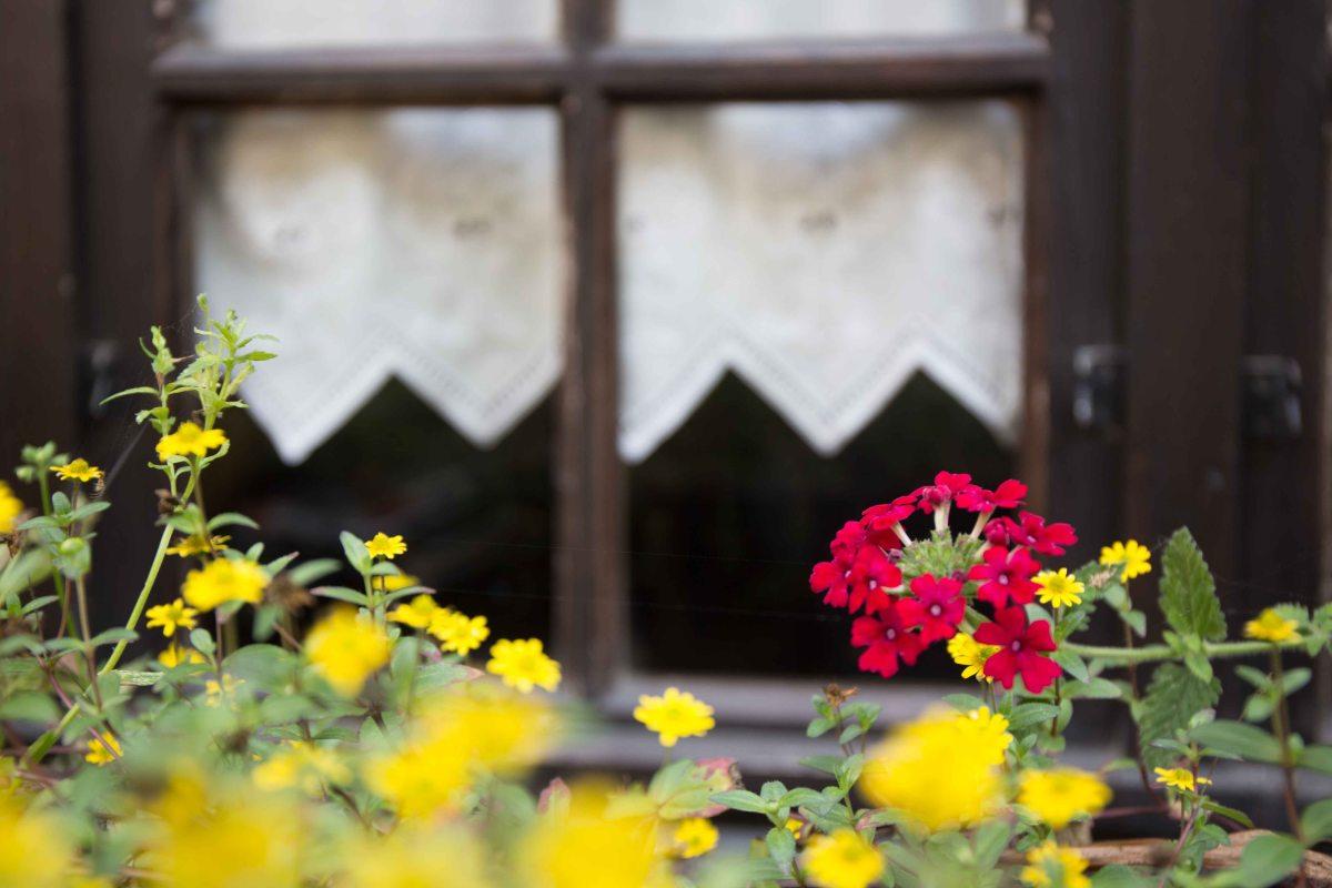 Windows in Dinan