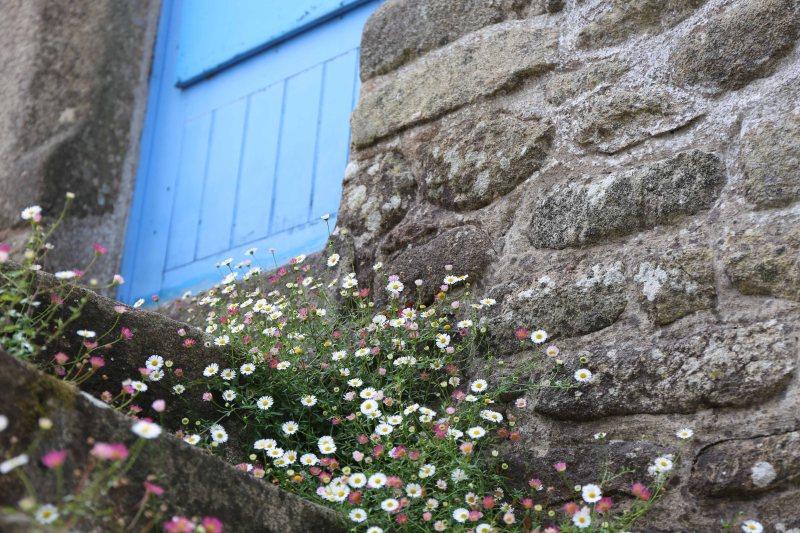 w3e-flowers-on-steps